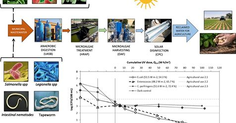 Artículo INMAR: Combining sun-based technologies (microalgae and solar disinfection) for urban wastewater regeneration